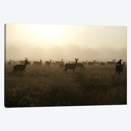 Sea Of Does Canvas Print #MXE44} by Max Ellis Canvas Wall Art