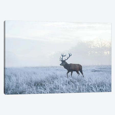 Sea Of White Canvas Print #MXE45} by Max Ellis Canvas Artwork