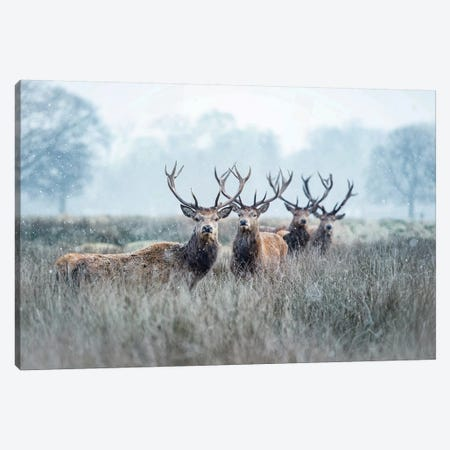 Snow Patrol Canvas Print #MXE47} by Max Ellis Canvas Art