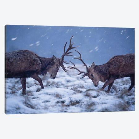 Snowrut Canvas Print #MXE48} by Max Ellis Canvas Print