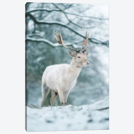 Snowy White Canvas Print #MXE49} by Max Ellis Art Print