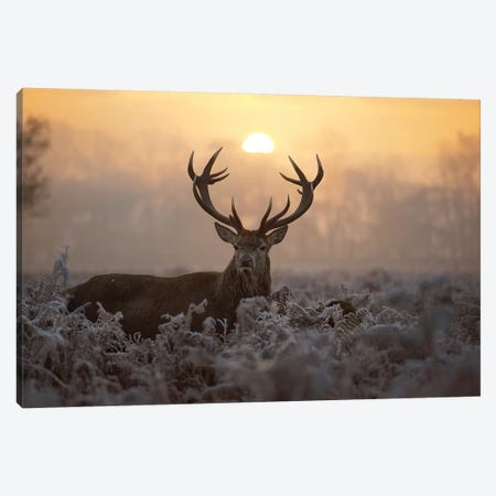 Catch The Sun Canvas Print #MXE4} by Max Ellis Canvas Art