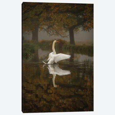 Solo Swan Canvas Print #MXE50} by Max Ellis Canvas Artwork