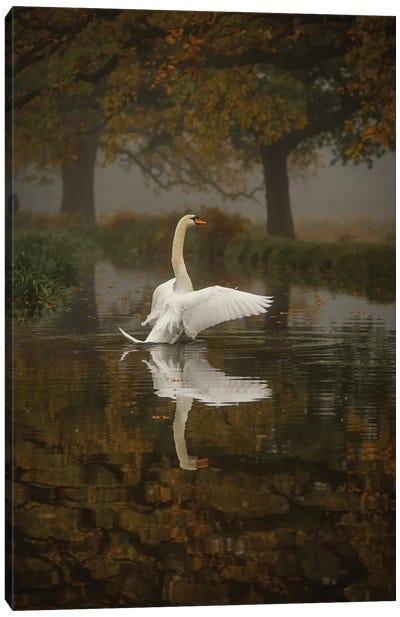 Solo Swan Canvas Art Print