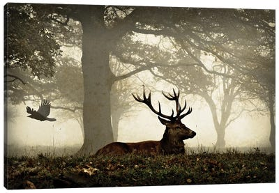 Stag And Crow Texture Canvas Art Print