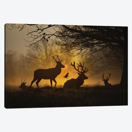 Stags And Crows II Canvas Print #MXE54} by Max Ellis Art Print