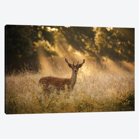 Summer Fallow Canvas Print #MXE58} by Max Ellis Canvas Wall Art