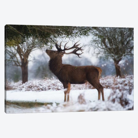 Surveying The Holly Canvas Print #MXE59} by Max Ellis Canvas Art