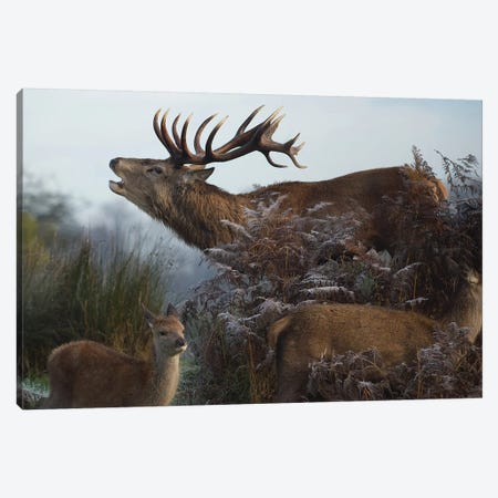 The King Canvas Print #MXE62} by Max Ellis Canvas Art Print