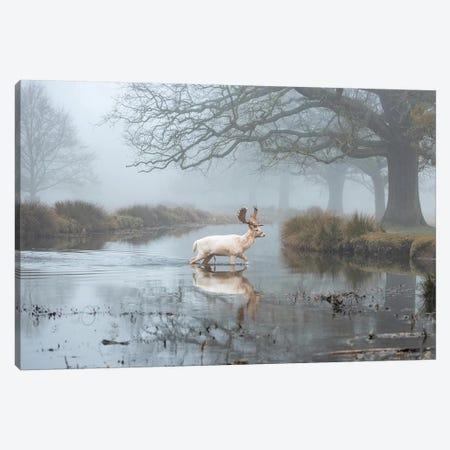 White Buck Stream Canvas Print #MXE66} by Max Ellis Canvas Art