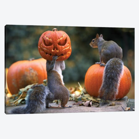 The Pumpkin Shot Copy Canvas Print #MXE73} by Max Ellis Canvas Art