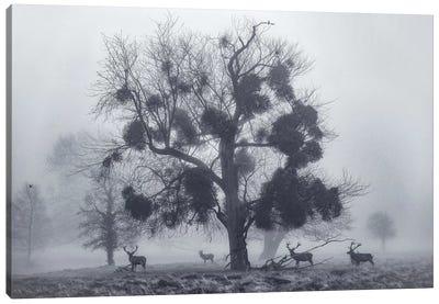 Tudor Mist Canvas Art Print