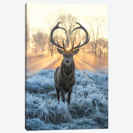 Love You Deer Fire And Ice Canvas Print #MXE78} by Max Ellis Canvas Artwork
