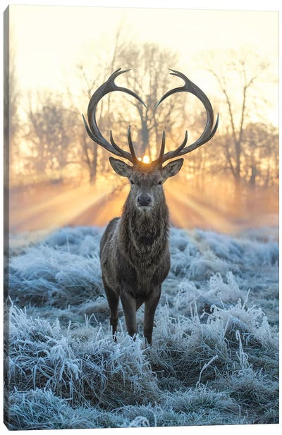 Love You Deer Fire And Ice Canvas Art Print