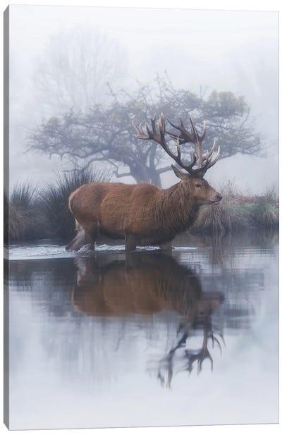 Mist And Hawthorn Canvas Art Print