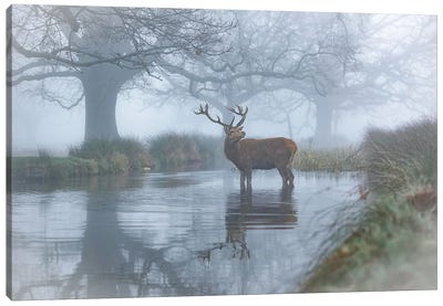 Monarch In The Stream Canvas Art Print