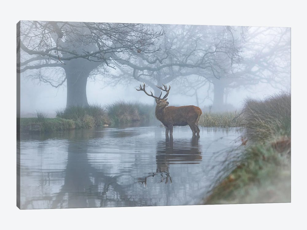 Monarch In The Stream by Max Ellis 1-piece Canvas Print