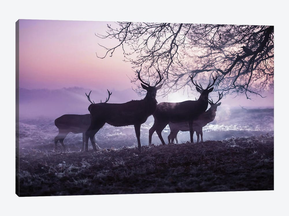 Mystic Mists by Max Ellis 1-piece Canvas Wall Art