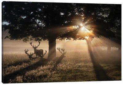 Summertime Dawn Under Chestnut Canvas Art Print