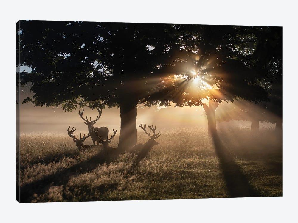Summertime Dawn Under Chestnut by Max Ellis 1-piece Art Print