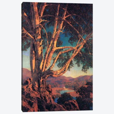 Old White Birch Canvas Print #MXP11} by Maxfield Parrish Canvas Print