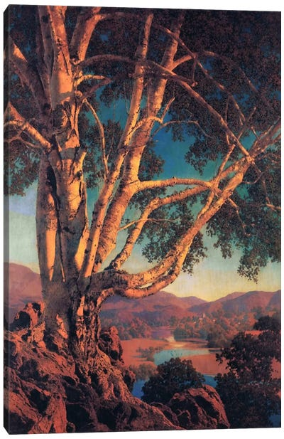 Old White Birch Canvas Art Print