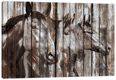 Three Horses Canvas Art Print
