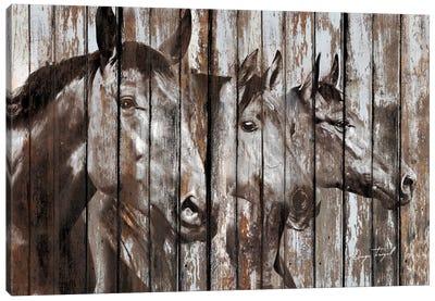 Three Horses Canvas Art Print