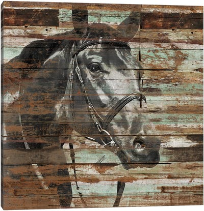 The Horse Canvas Art Print