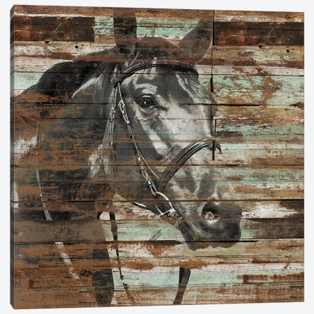 The Horse Canvas Print #MXS162} by Diego Tirigall Canvas Wall Art