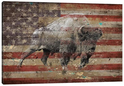 American Bison II Canvas Art Print