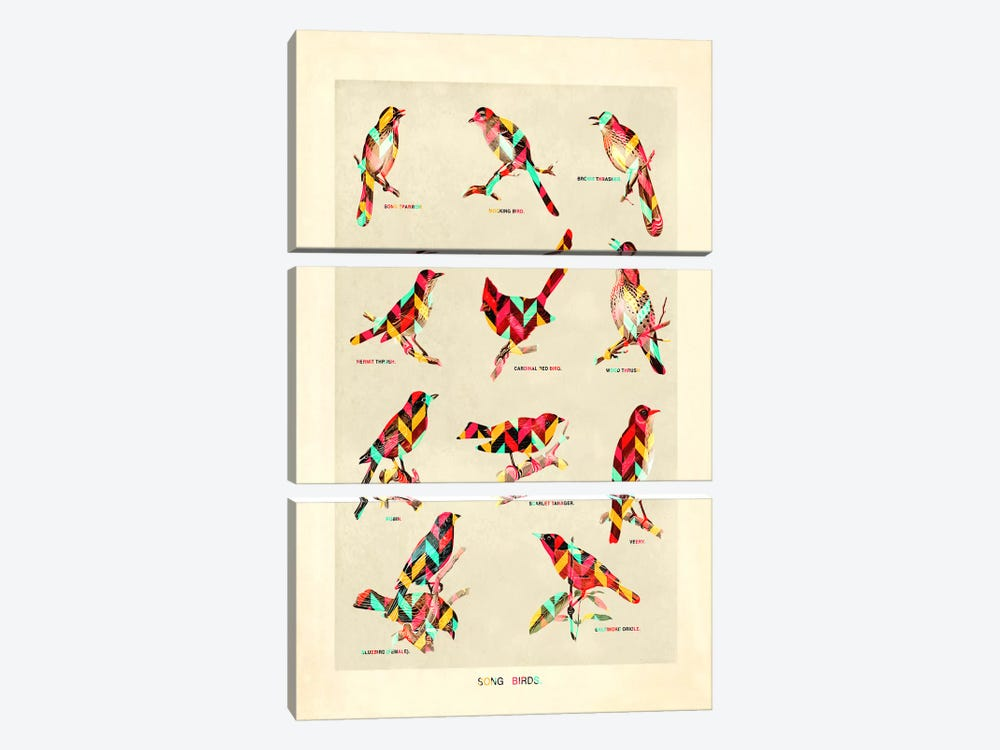 Song Birds by Diego Tirigall 3-piece Art Print
