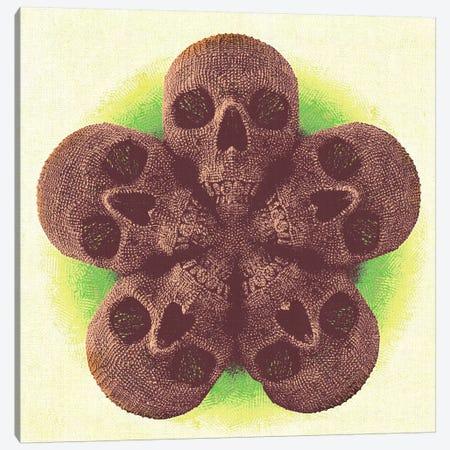 Skull Mandala Canvas Print #MXS78} by Diego Tirigall Canvas Artwork