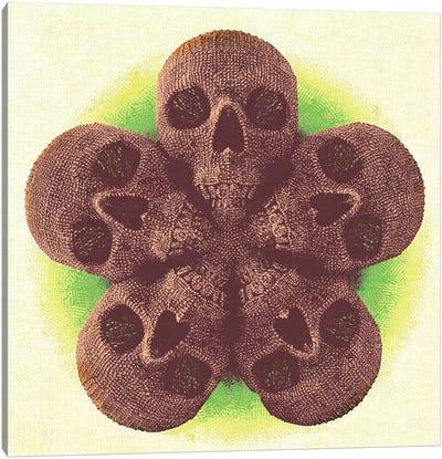 Skull Mandala Canvas Print #MXS78