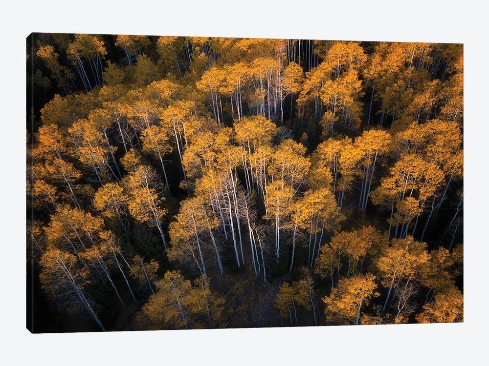 Aspen In Autumn by Mei Xu 1-piece Canvas Wall Art