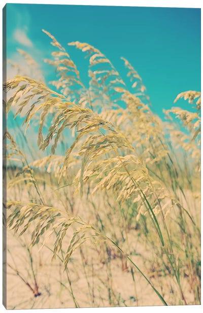 Sea Oats Canvas Art Print
