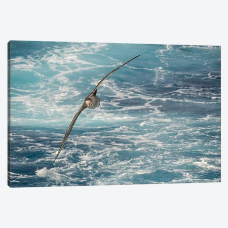 Northern Giant Petrel or Hall's Giant Petrel soaring over the waves of the South Atlantic Canvas Print #MZW113} by Martin Zwick Canvas Artwork