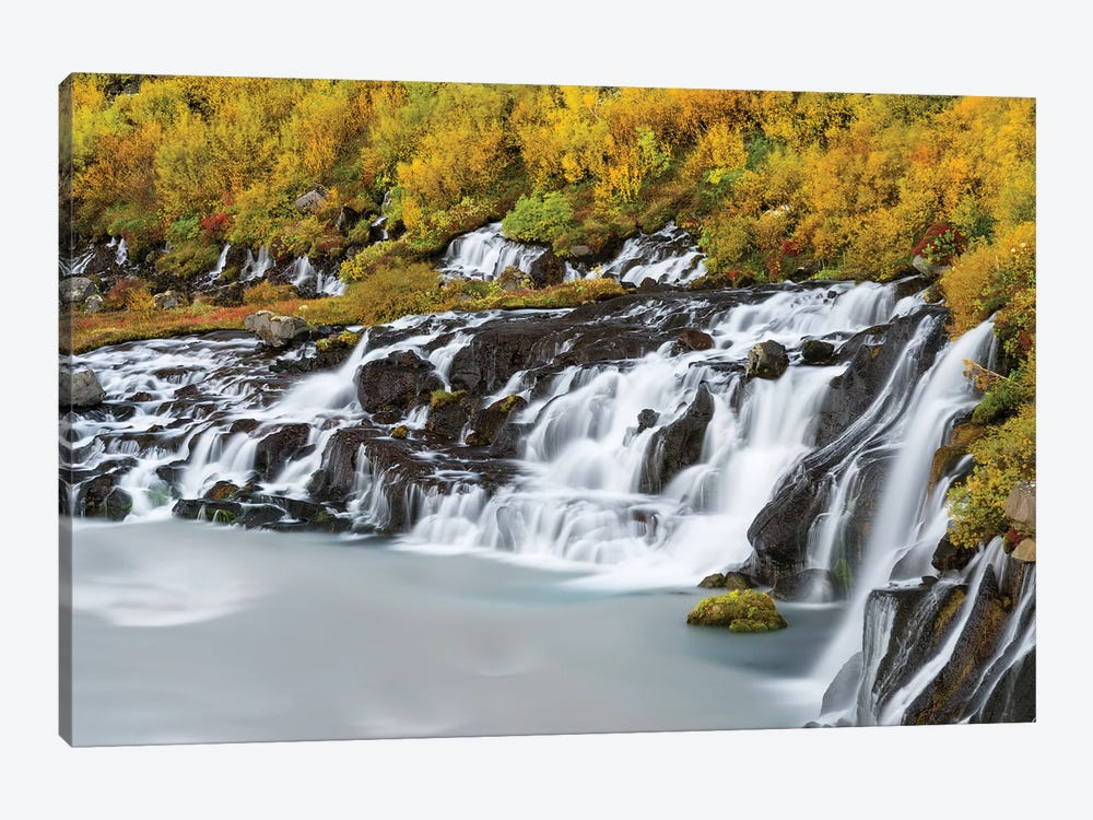 Waterfall Hraunfossar with colorful foliage during fall. Northern Iceland by Martin Zwick 1-piece Canvas Print