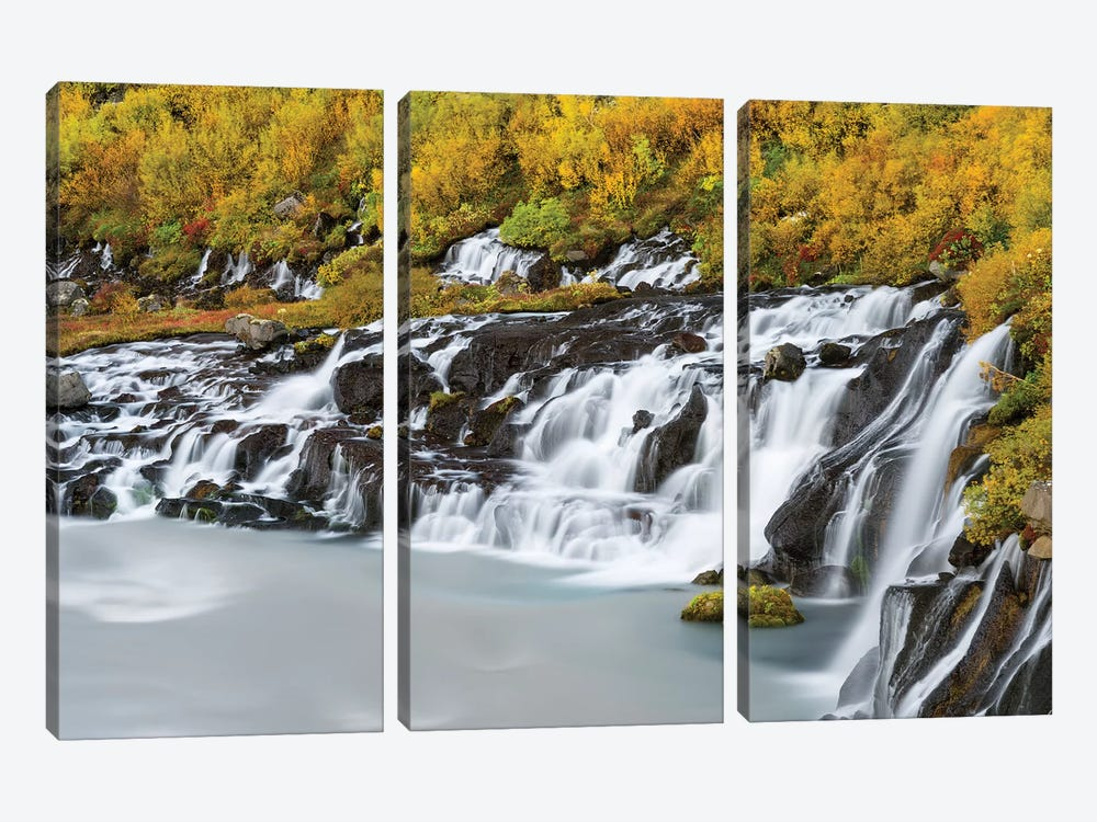 Waterfall Hraunfossar with colorful foliage during fall. Northern Iceland by Martin Zwick 3-piece Canvas Print