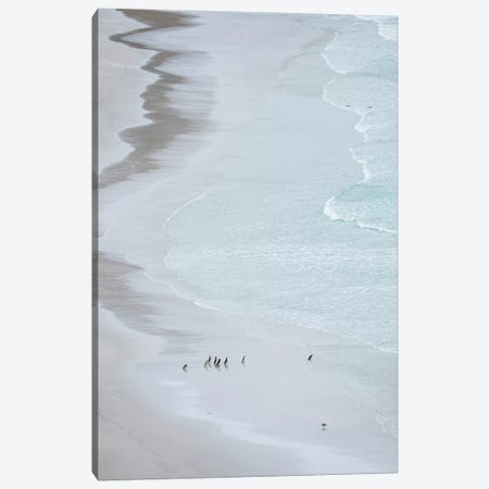 Group On Empty Beach. Magellanic Penguin, Falkland Islands. Canvas Print #MZW189} by Martin Zwick Canvas Print