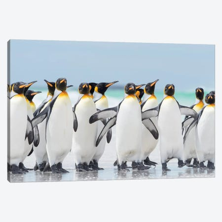 King Penguin On Falkland Islands. Canvas Print #MZW231} by Martin Zwick Canvas Print