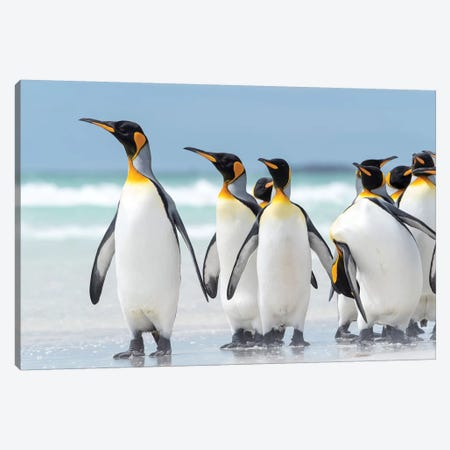 King Penguin, Falkland Islands. Canvas Print #MZW249} by Martin Zwick Canvas Art