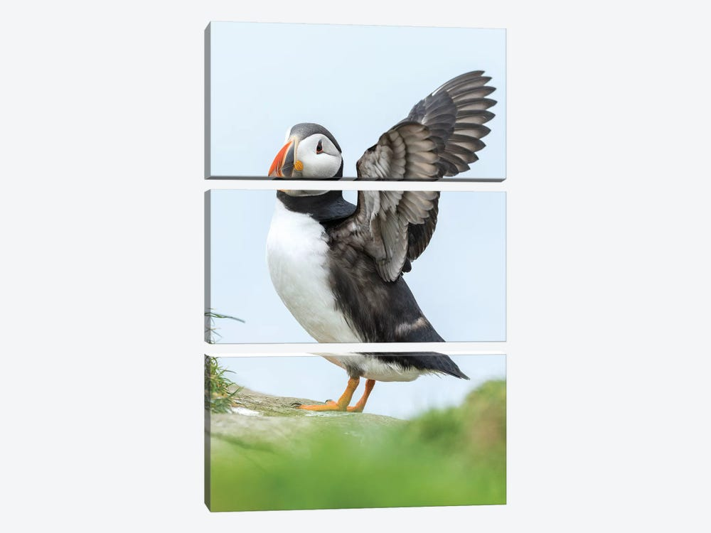 Atlantic Puffin, Mykines, Faroe Islands, Denmark II by Martin Zwick 3-piece Canvas Artwork