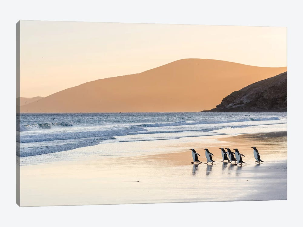 Gentoo Penguin Falkland Islands III by Martin Zwick 1-piece Canvas Art Print