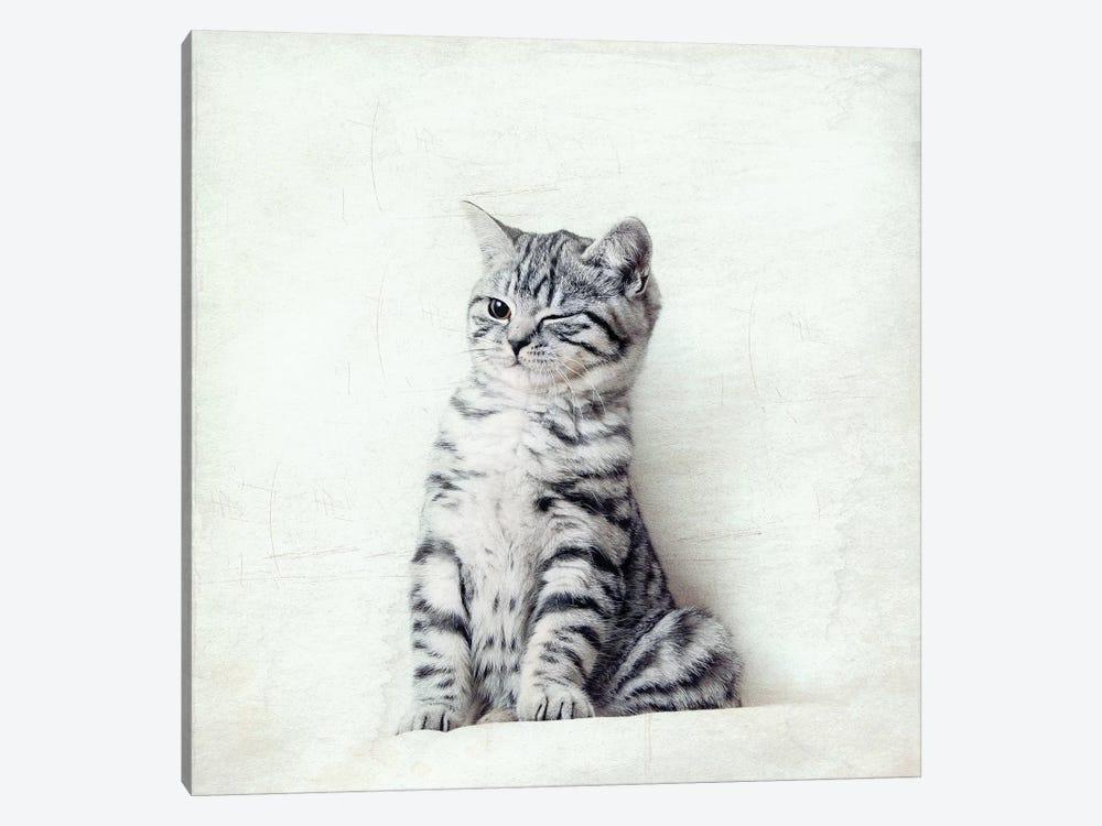 Cat Wink by Nadia Attura 1-piece Canvas Wall Art
