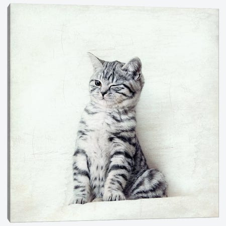 Cat Wink Canvas Print #NAD1} by Nadia Attura Canvas Print