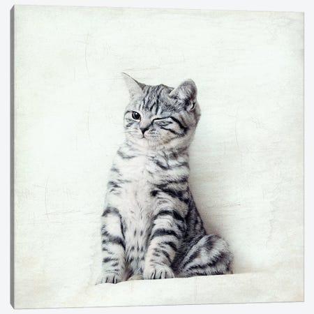 Cat Wink Canvas Print #NAD1} by Nadia Attura Canvas Print