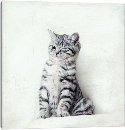 Cat Wink Canvas Art Print