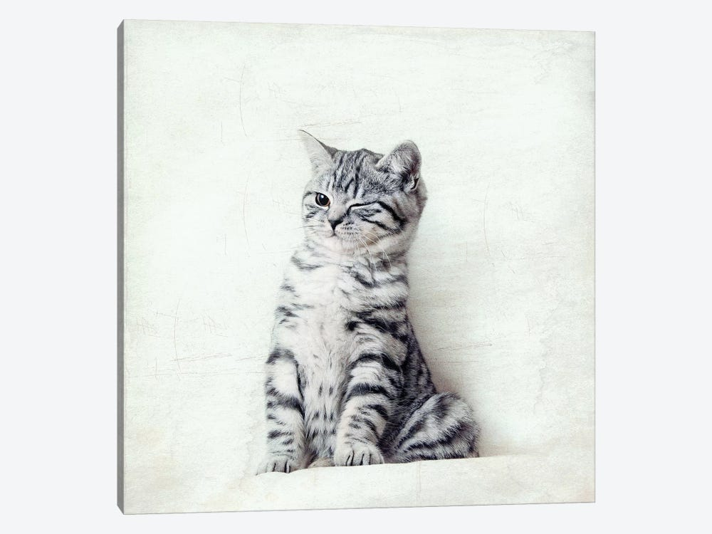 Cat Wink by Nadia Attura 1-piece Canvas Wall Art
