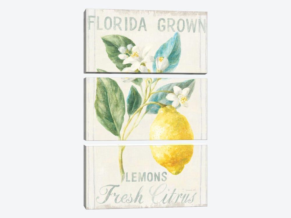 Floursack Lemon I by Danhui Nai 3-piece Canvas Wall Art